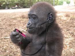 Monyet ponsel